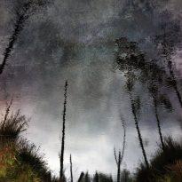 CHIHEI HATAKEYAMA (JPN) – GHOST WOODS